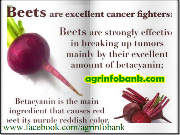 Beets are excellent cancer fighter