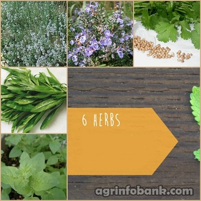 6 Herbs That Add Flavor and Nutrition